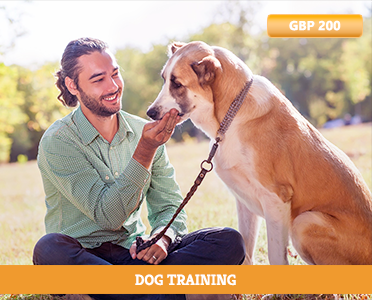 Dog Training - Dog Training Career - Become A Dog Trainer - animal trainer - Trainer - how to learn online