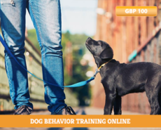 Dog-Behavior-Training-Online-dog-behaviour-training